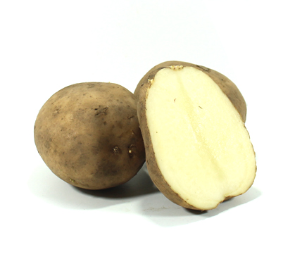 Patata blanca, kannebec